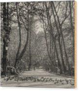 The Park Wood Print