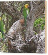 The Parrot Argument Wood Print