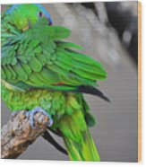The Parrot Wood Print