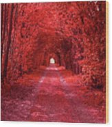 The Path 2 Wood Print