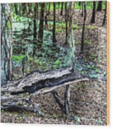 The Path By The Log Wood Print