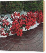 The Path To Christmas - Poinsettias, Trees, Snow, And Walkway Wood Print