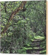 The Path We Walked Wood Print
