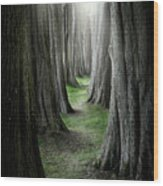 The Pathway Wood Print