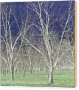 The Pecan Grove Wood Print