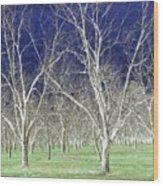 The Pecan Grove Wood Print