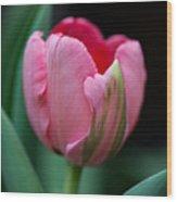 The Peculiar Pink Tulip Wood Print
