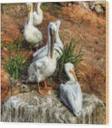 The Pelican Clan Wood Print