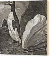 The Penguin With The Conc And Other Wood Print