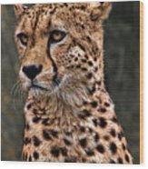 The Pensive Cheetah Wood Print