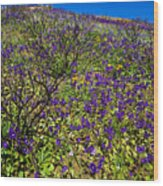 The Phacelia Patch Wood Print
