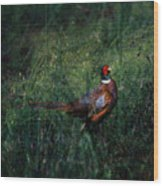 The Pheasant In The Autumn Colors Wood Print