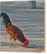 The Picking Rooster Wood Print