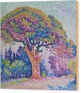 The Pine Tree At Saint Tropez Wood Print by Paul Signac