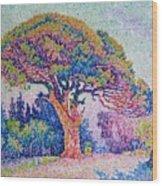 The Pine Tree At Saint Tropez Wood Print