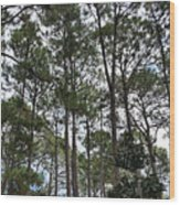 The Pines Of Tallahassee Wood Print