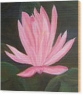 The Pink Water Lily Wood Print