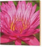 The Pinkest Of Pinks Wood Print
