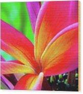 The Plumeria Flower Wood Print
