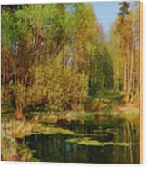 The Pond In The Spring Wood Print