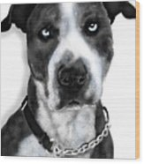 The Pooch With Blue Eyes Wood Print