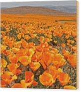 The Poppy Fields - Antelope Valley Wood Print