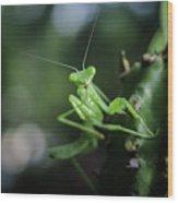 The Praying Mantis Wood Print