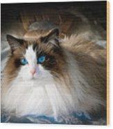The Blue Eyed Princess  Wood Print