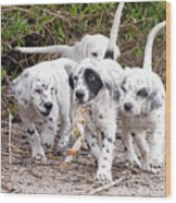 The Puppy's Prize Wood Print