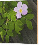 The Purple Flower Wood Print