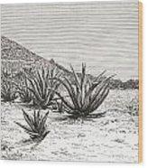 The Pyramid Of The Sun, Teotihuacan Wood Print