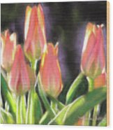 The Queen's Tulips Wood Print