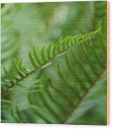 The Quiet Beauty Of Ferns Wood Print