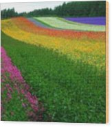 The Rainbow Of Flower At Hokkaido Wood Print