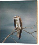 The Raptor - Osprey Wood Print
