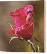 The Red Bud Wood Print
