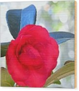 The Red Camellia Wood Print