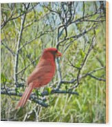 The Red Cardinal Wood Print