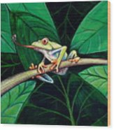 The Red Eyed Tree Frog Wood Print
