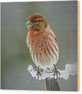 The Red Finch Wood Print