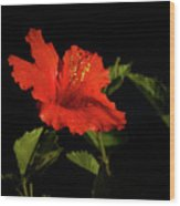 The Red Hibiscus Wood Print