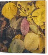 The Red Leaf Wood Print