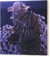The Red Lionfish Wood Print