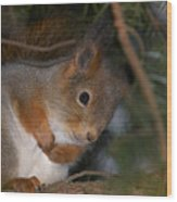 The Red Squirrel 4 Wood Print