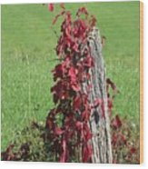 The Red Vine - Photograph Wood Print