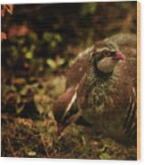 The Redlegged Partridges Wood Print