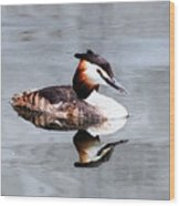 The Reflection Of A Grebe Wood Print