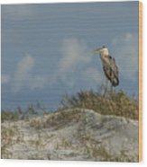 The Regal Great Blue Heron Wood Print