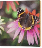 The Regal Red Admiral Wood Print