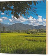 The Rice Fields Of Pai, Thailnad Wood Print
